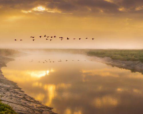 birds-in-flight-5366034